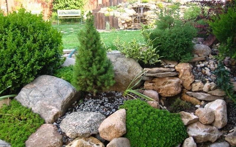 Украшение дачного участка композициями из растений и камней, созданными своими руками: фото красивых рокариев на даче
