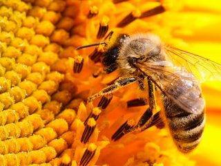 Про пчел для детей