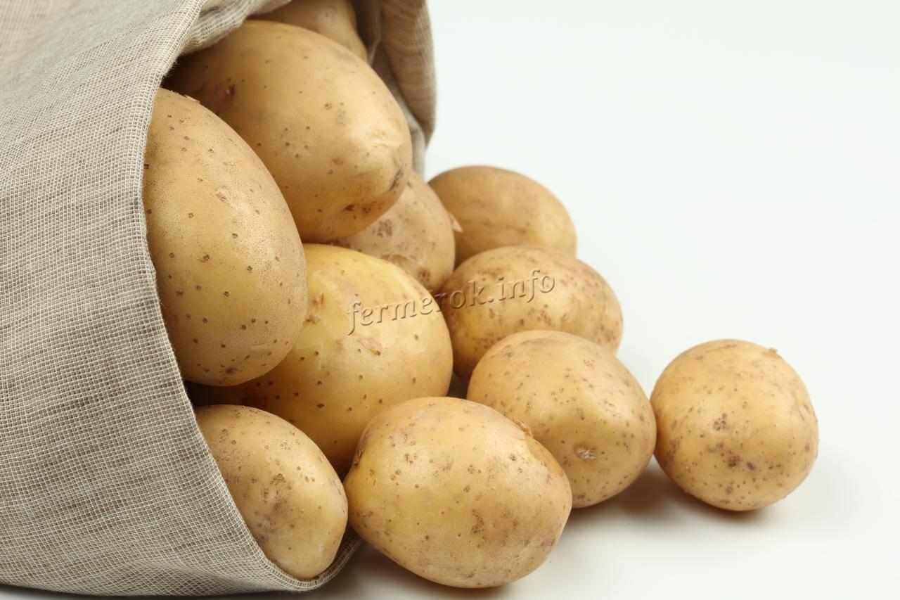 Картофель родриго: 8 особенностей и 10 советов