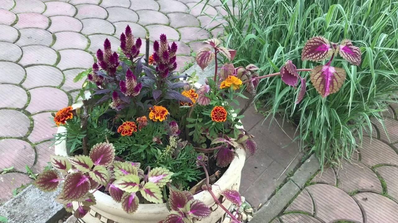 Неприхотливые цветы многолетники и однолетники долгоцветущие для сада и дачи: обзор растений с фото