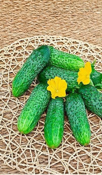 Огурцы пальчик: отзывы, фото, описание, выращивание