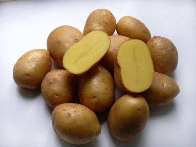 Картофель барон — описание сорта, фото, отзывы, посадка и уход