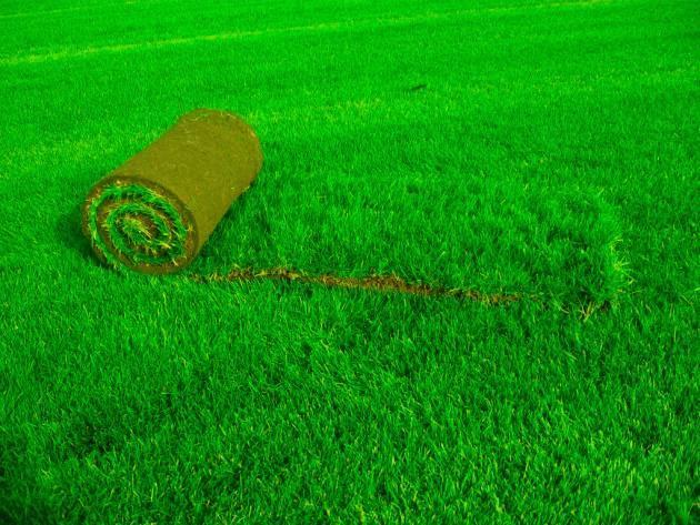 Технология выращивания рулонного газона