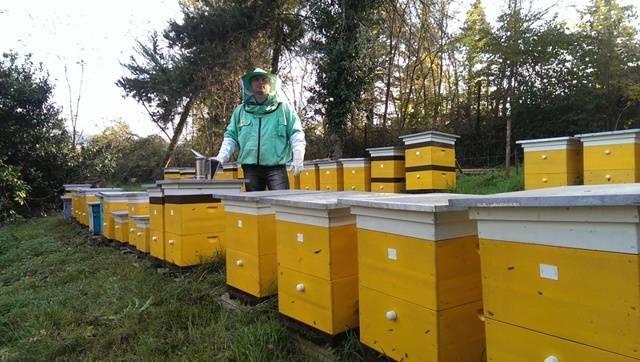 Пчеловодство как бизнес: выгодно ли заниматься пчеловодством?