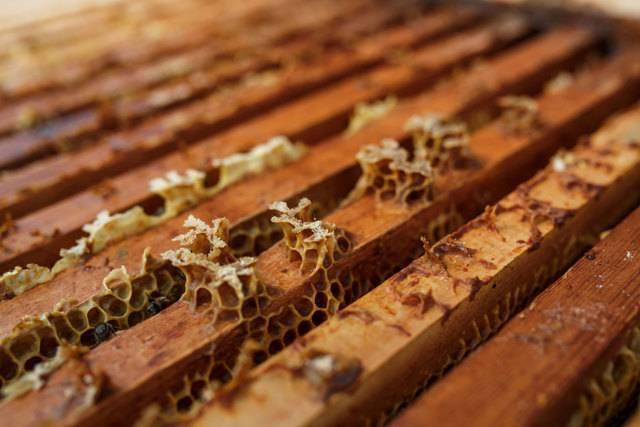 Пчеловодство как бизнес: этапы организации