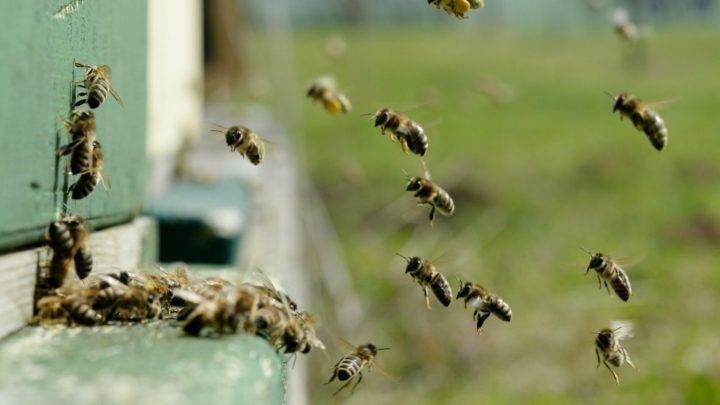 Бипин для пчел — инструкция