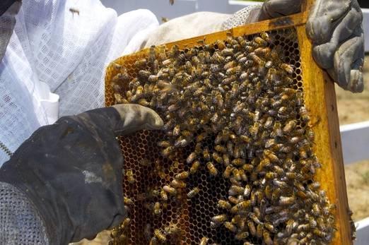 Описание двухкорпусного содержания пчел