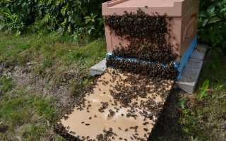 Особенности осеннего ухода за пчелами