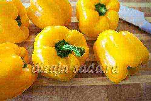 Богатырский сорт с устойчивостью к холодам — томат сибирский гигант желтый: отзывы об урожайности, описание
