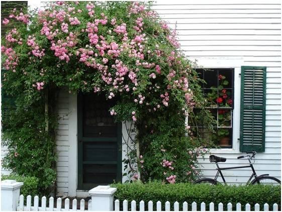 Как сделать опору и арку для плетистой розы своими руками