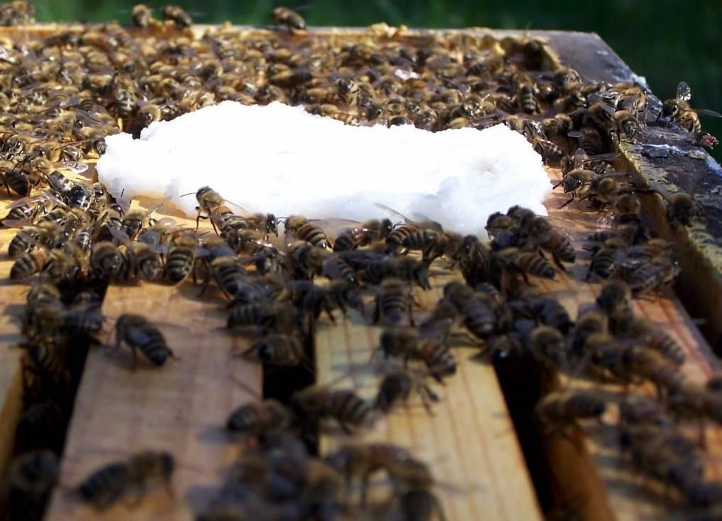 Чем и когда подкормить пчел весной