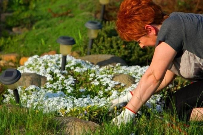 Применение луковой шелухи для огорода или сада