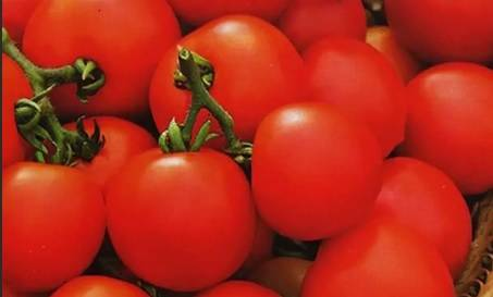 Лучшие сорта томатов для выращивания в подмосковье