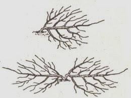 Черешня любава — описание сорта, фото, отзывы садоводов