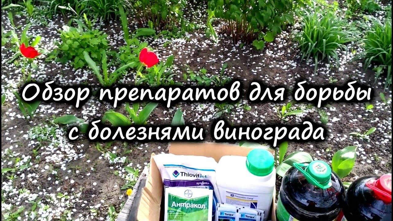 Системные фунгициды: применение, их роль в выращивании растений