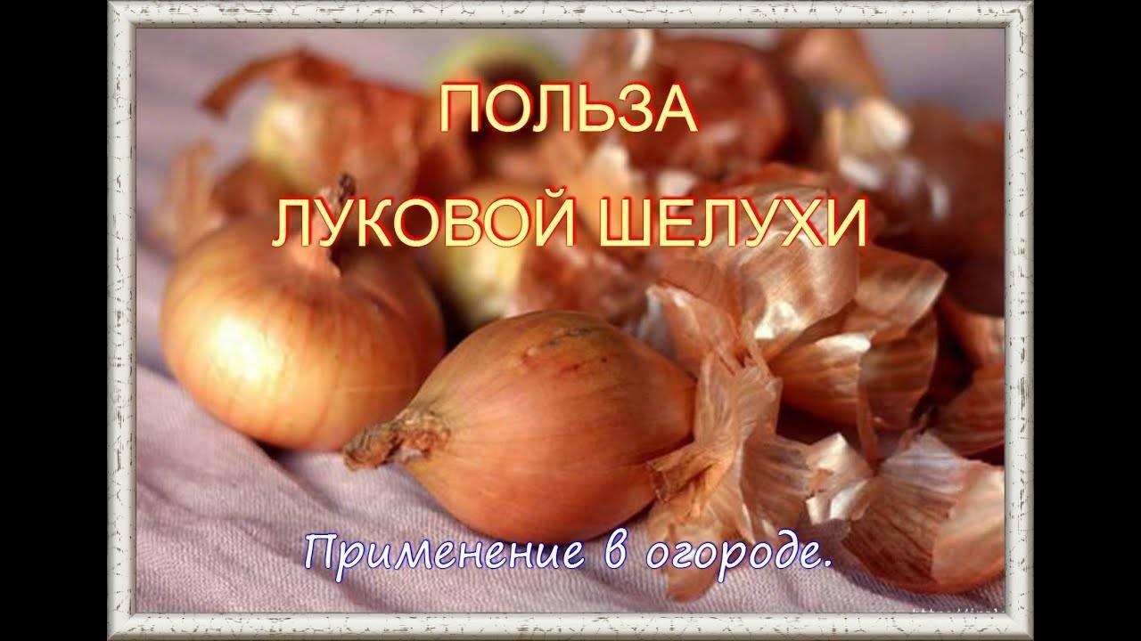 Луковая шелуха для сада и огорода: применение в качестве удобрения и средства борьбы с вредителями