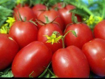 Диаболик: описание сорта томата, характеристики помидоров, посев