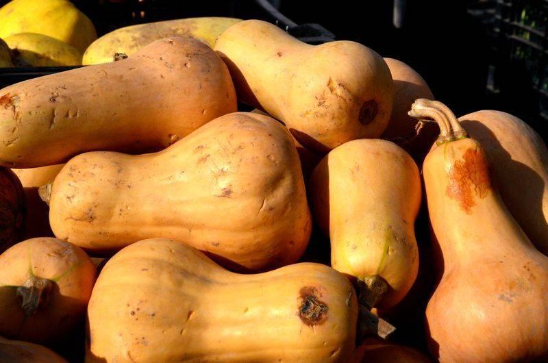 Низкокалорийный, но при этом сладкий овощ с приятным ароматом — тыква «медовая»