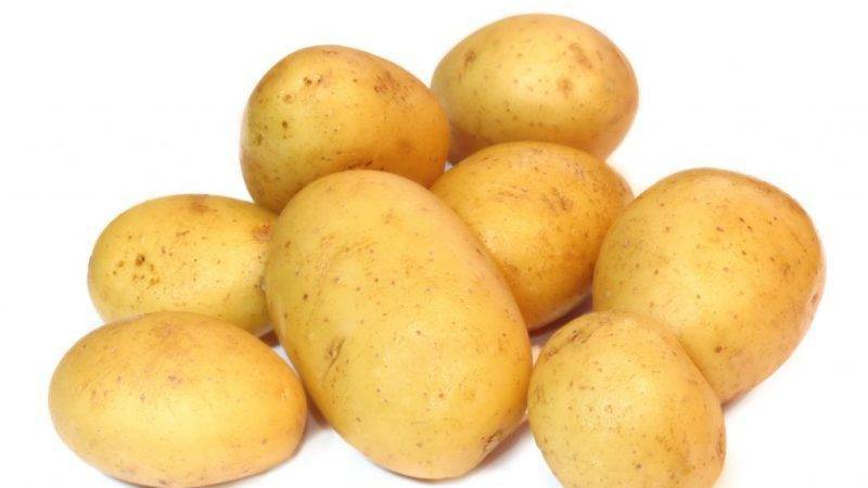 Картофель белорусский – вектор. описание клубней, правила выращивания, минусы, плюсы