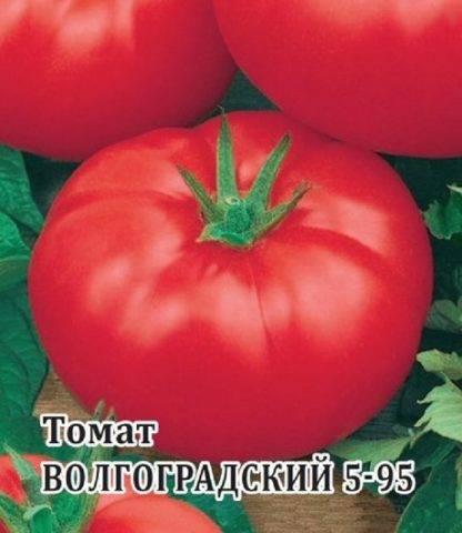 Томат волгоградский – скороспелый сорт