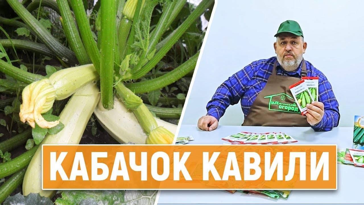 Кабачок кавили f1 – описание сорта, выращивание и уход