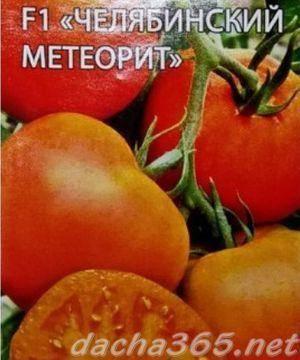 Томат челябинский метеорит: характеристика и описание гибридного сорта с фото