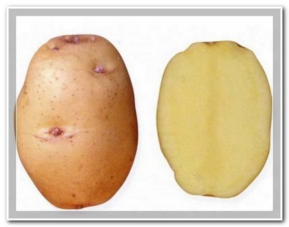 Подробное описание и советы агрономов по сортам картофеля: «петербургский», «барин», «лидер» и другие