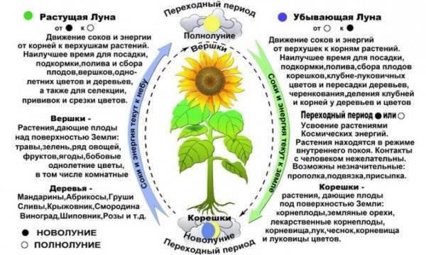 Лунный посевной календарь на март 2020
