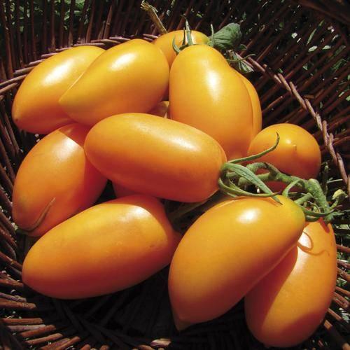 Томаты банан оранжевый - описание сорта и фото