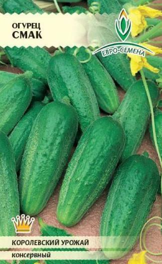 Белые огурцы: секреты выращивания отличного урожая