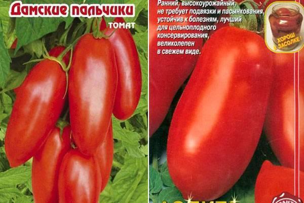 Томат дамские пальчики: выращивание помидор, характеристика и описание сорта