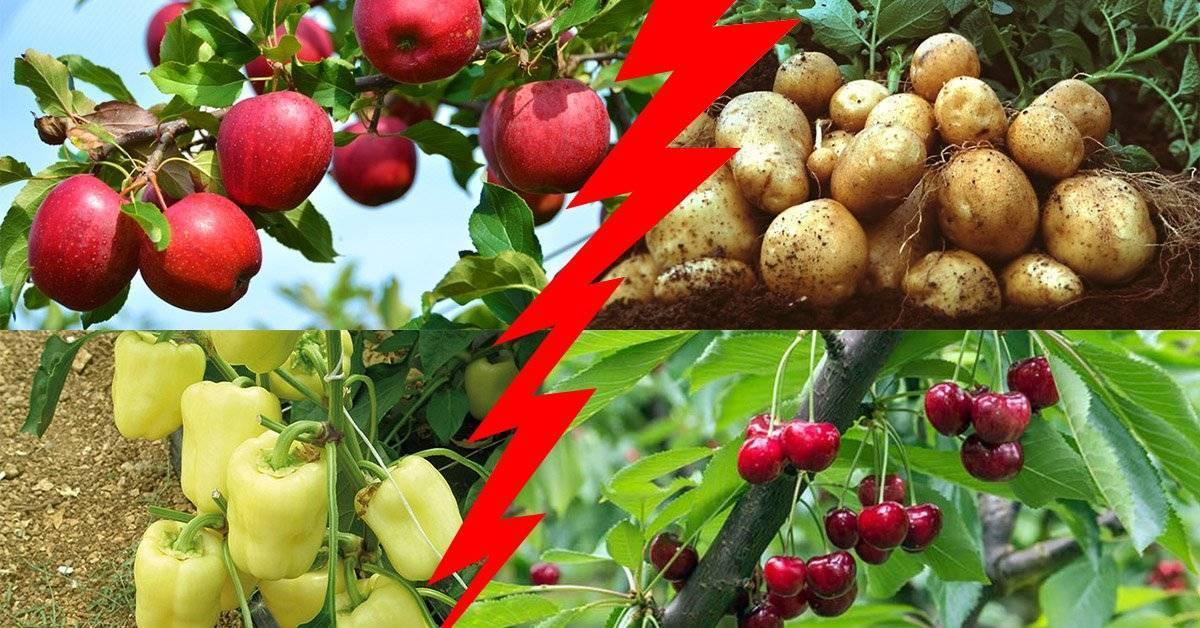 Взаимовыгодное соседство: что посадить рядом с яблоней