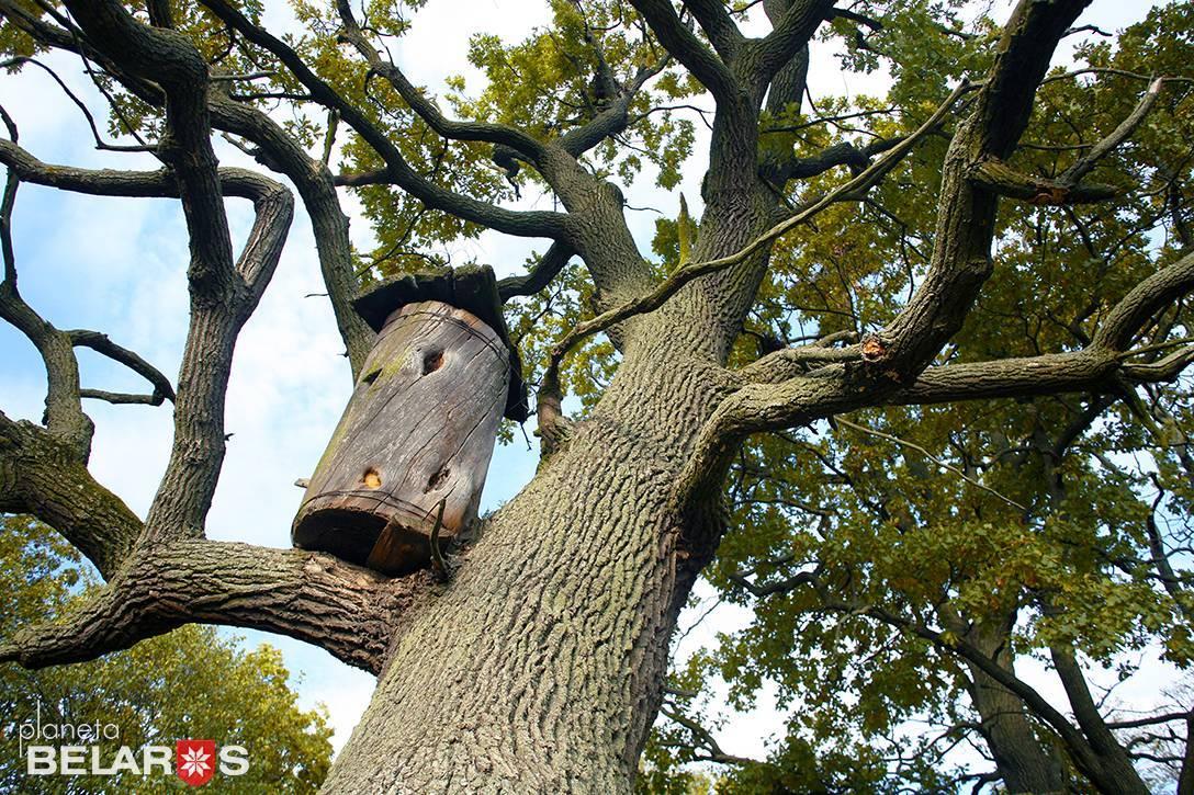 Бортевое пчеловодство — википедия