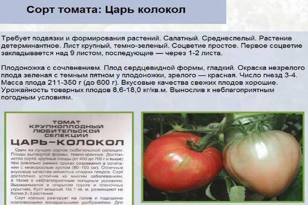 Томат царь колокол: описание сорта, его характеристика и фото