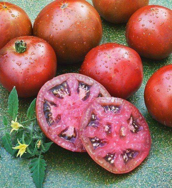 Томат балконное чудо — получаем помидоры не выходя из дома!