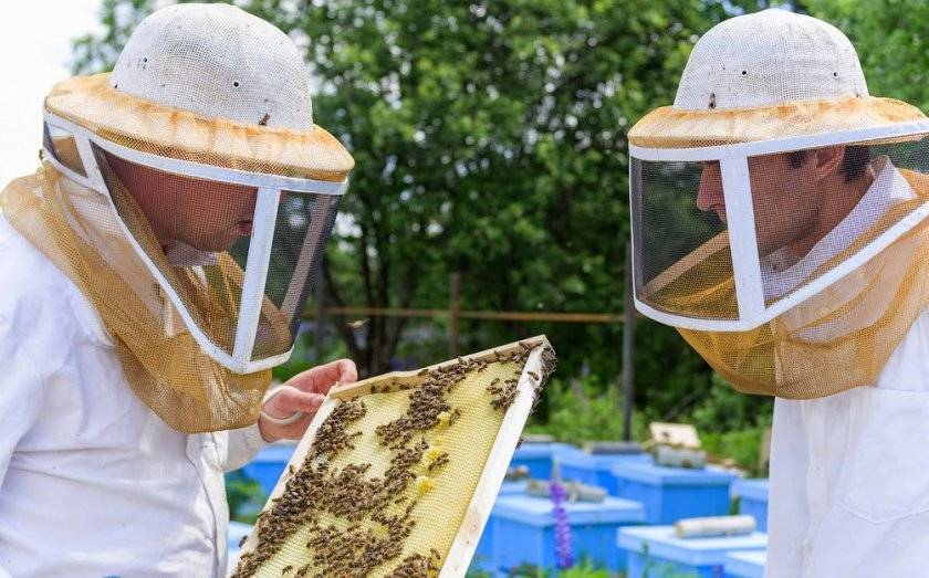 Ловушки для пчел и ос