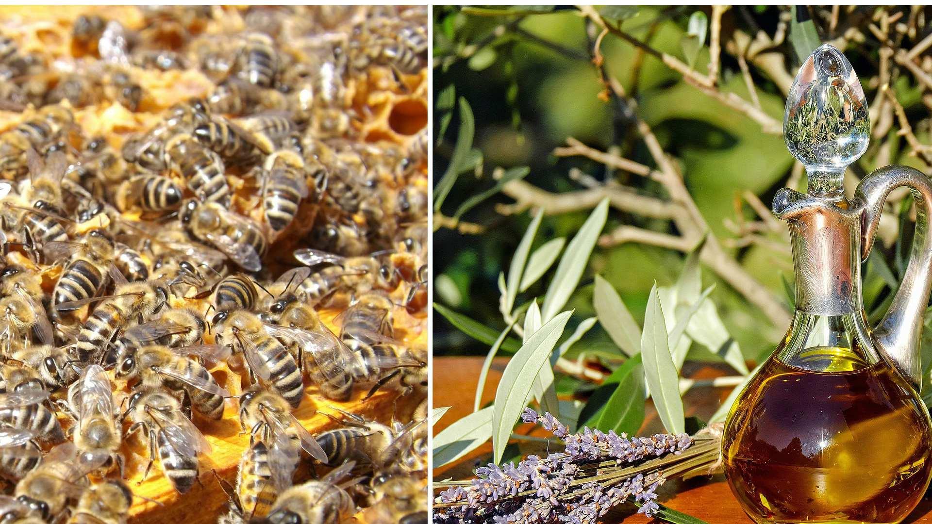 Лечебные свойства и применение пчелиного подмора