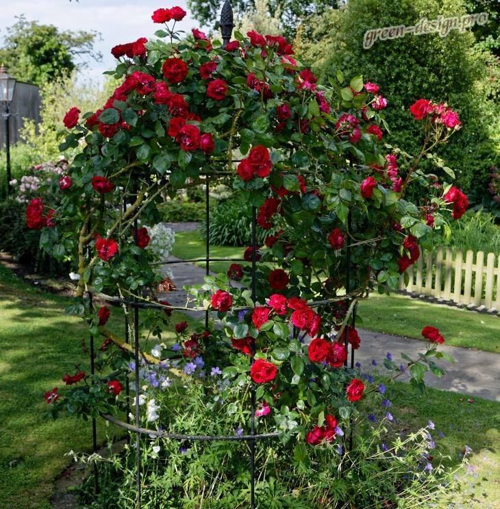Розарий на даче: 175 фото современных идей красивой разбивки цветника