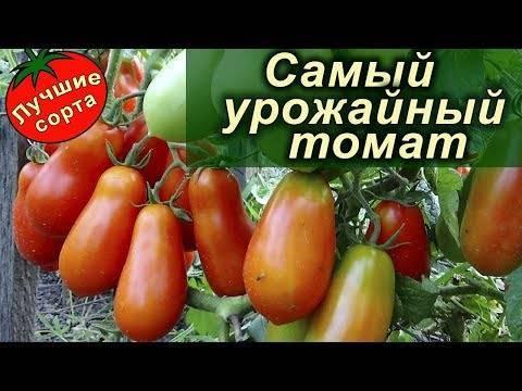 Лучшие сорта томатов для засолки в бочках и консервирования: с фото и названиями