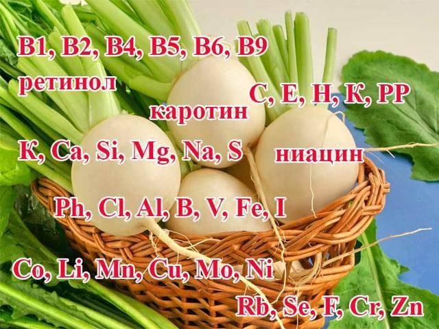 Капуста кольраби: полезные свойства, рецепты вкусных блюд