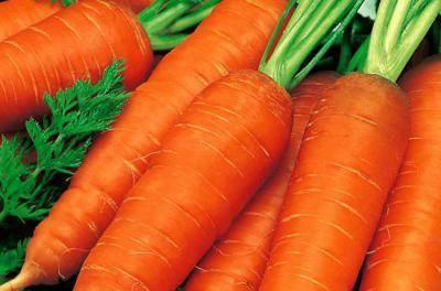 Лосиноостровская морковь: описание, выращивание