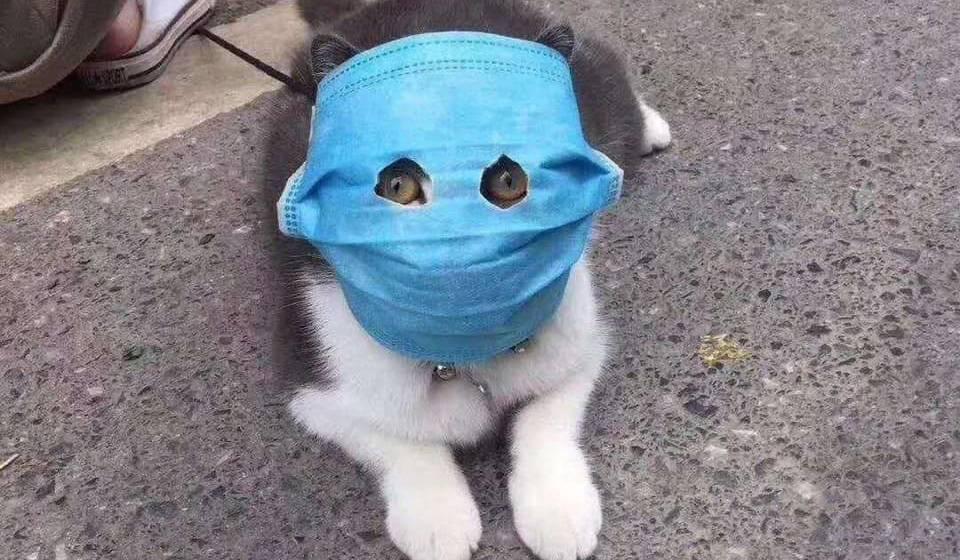 |  ветеринарная служба владимирской области