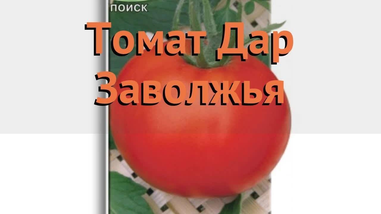 Давно знакомый огородникам томат дар заволжья: подробное описание, агротехника, отзывы