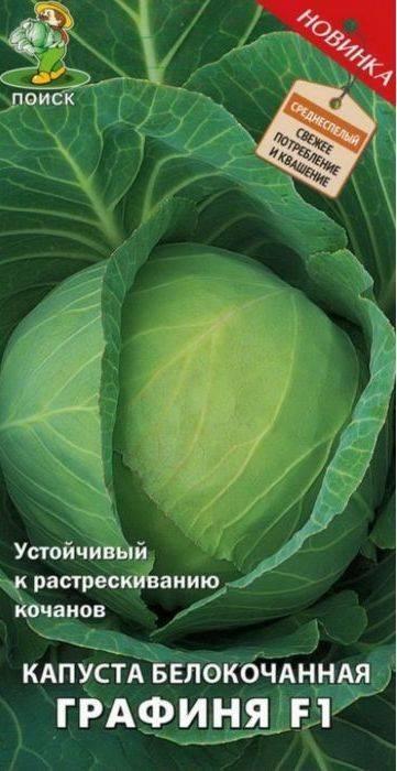 О капусте золотой гектар: описание сорта, характеристика, выращивание