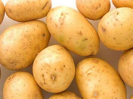 Сорт картофеля санте (санта) – описание и фото