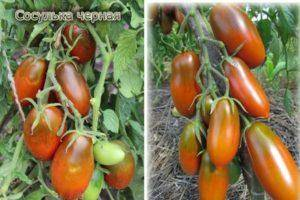 Описание и характеристики томата сорта груша красная