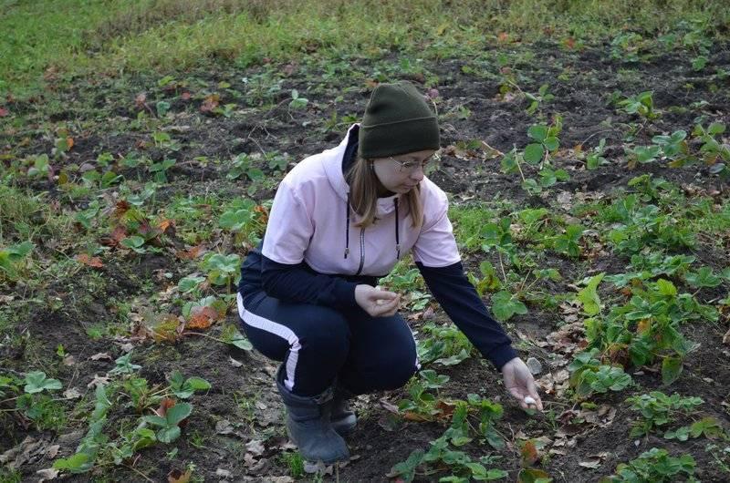Что можно сажать рядом с петрушкой в открытом грунте на одной грядке, а что нельзя, после каких овощей разрешено выращивать зелень, в том числе на следующий год