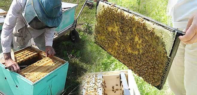Как подкормить пчел осенью