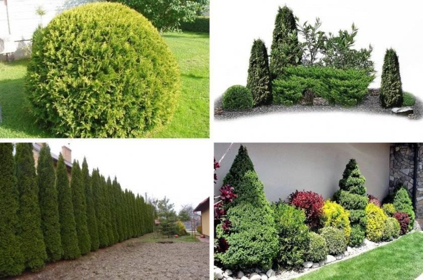 Растения в ландшафтном дизайне: сочетание цветов, кустарников и деревьев в саду