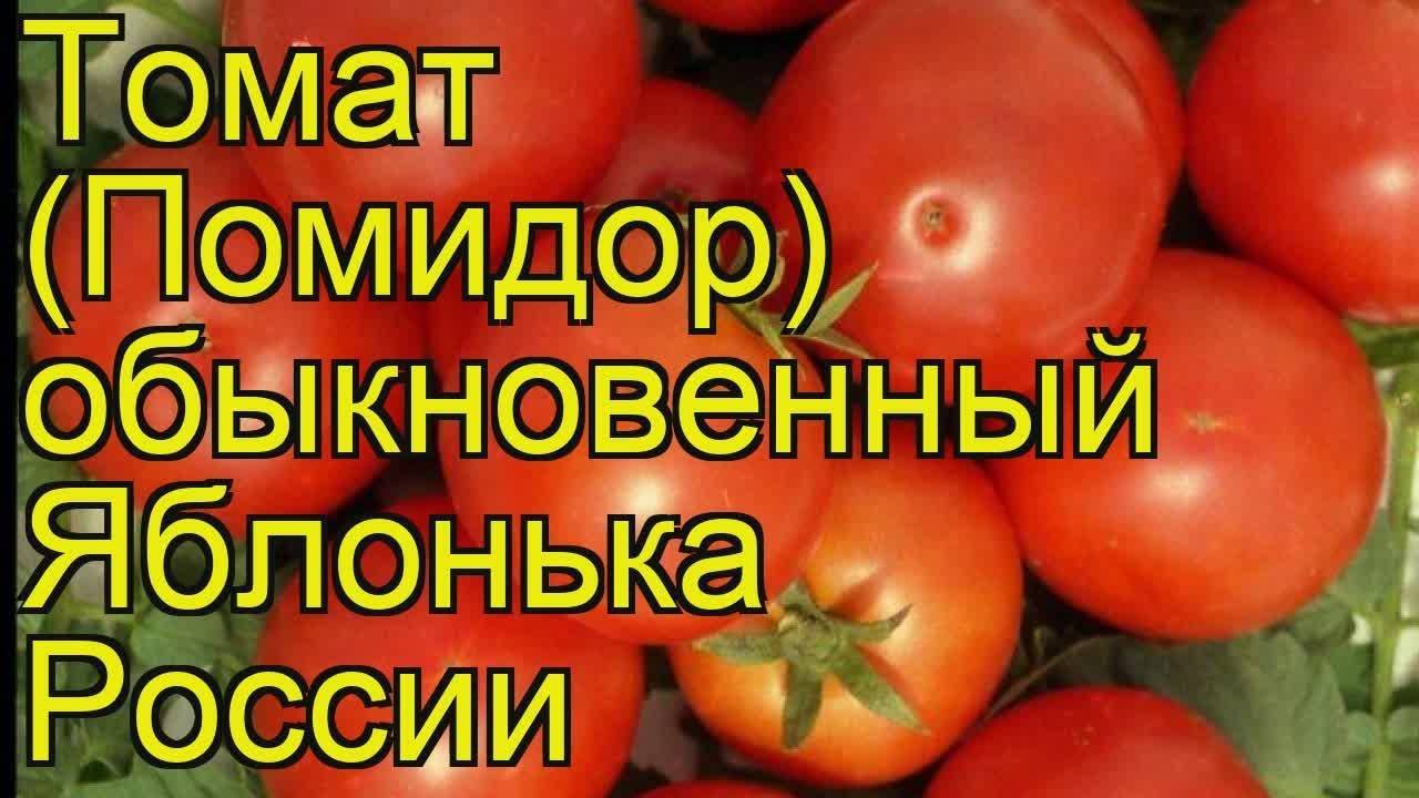 Яблонька россии – томат российских селекционеров для «ленивых»